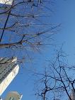 봄이다. 와! 하늘 파란거봐.