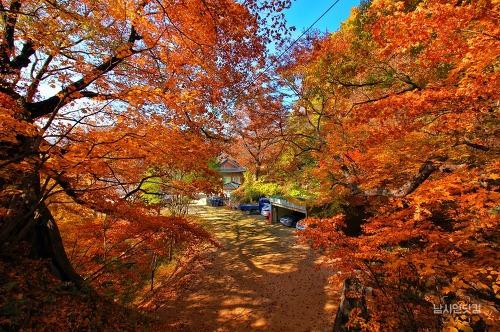 가을 단풍이 아름다운 안동 봉정사의 늦가을 풍경