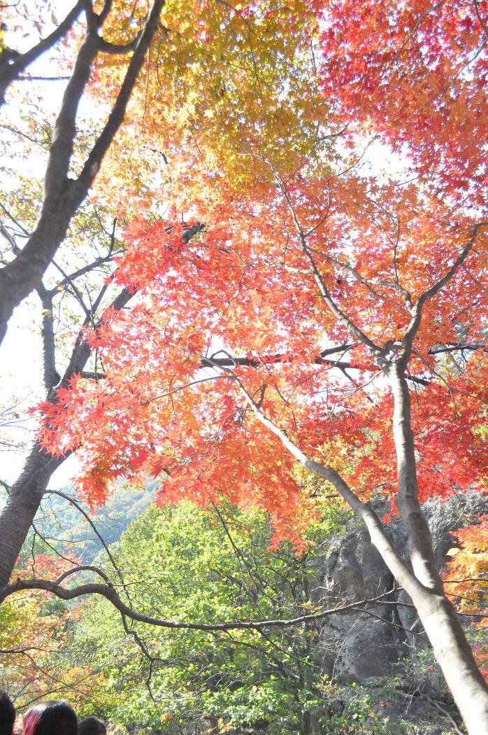 가을..내장산 단풍