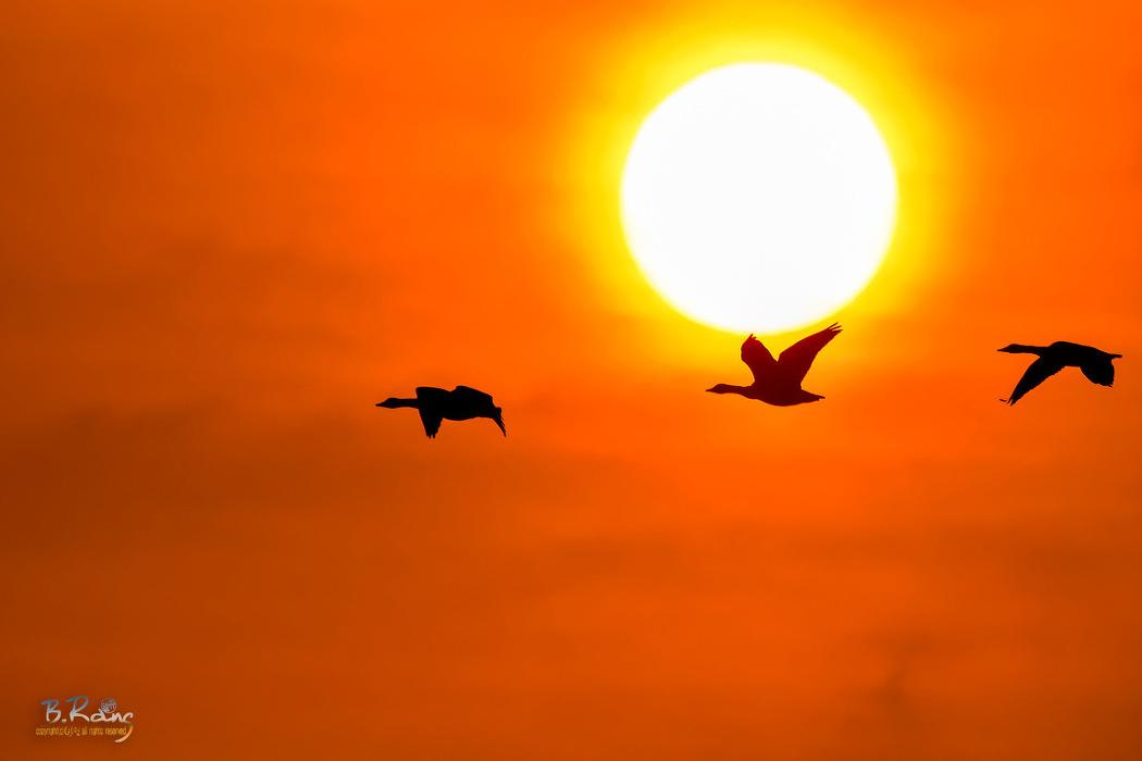 주남의 태양