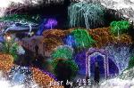 [가평여행]아침고요수목원 빛축제