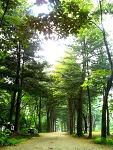 [남이섬] 산책길