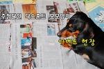 닥스훈트 모모양의 추첨이 더 즐거웠던 푸샵 블로그 이벤트 (^▽^)