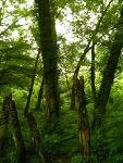 [남이섬] 숲속 장승