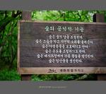 숲의 공익적 기능 - 제주 사려니 숲길
