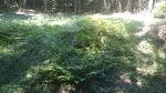 [사는이야기] 조상님 산소 벌초를 마쳤습니다/벌초대행 비용/벌초 시기/벌초 기계