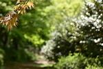 만화방초, 그 이름만큼이나 아름다운 숲속에서의 산책