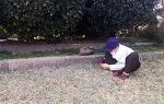 [포토에세이] 봄 소식, 쑥 캐는 여인/부산 민주공원/도다리 쑥국