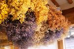 [카페 / 익선동 플라워카페 마당] 한옥의 고즈넉함과 화사한 꽃들이 어우러진,,, 플라워카페 마당 # 카페라떼 # 익선동 한옥마을 2017