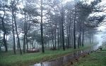 제주 절물자연휴양림을 방문해보고 이중섭거리와 제주 에코랜드까지 가보세요