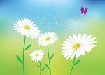 Daisy 꽃 일러스트