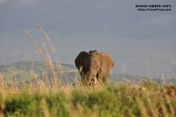야생동물의 천국 마사이 마라를 가다(후):아프리카 케냐