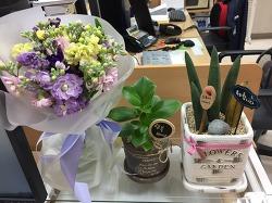 사무실 귀퉁이 꽃밭 (2017.2.7)