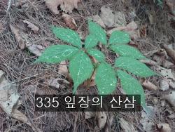 335 잎장의 산삼 사진 기록