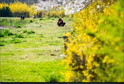 또다시.. 봄 - (1)