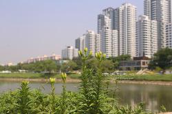 서울 도심 속 자연을 느끼로 떠난 '서래섬' 가는 길까지