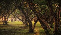 소사나무숲에 빛이들면