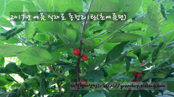 2017년 여름식재료 정리1탄 (초여름편)