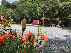 Camping#8. 청도 삼계리 주말농원 캠핑장
