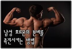 남성 호르몬의 분비를 촉진시키는 방법