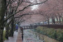 [진해가볼만한곳]진해 여좌천 로망스 다리 벚꽃 2017.3.29