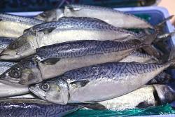 수입산 고등어와 국내산 고등어의 구별법