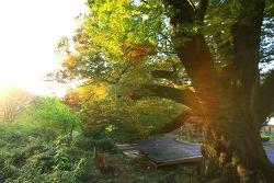 반천년의 숲