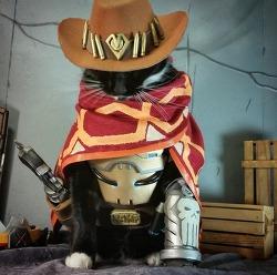 짤 움짤 GIF 이미지 - 오버워치 맥크리 고양이