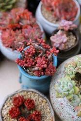 키우기 쉬운 식물 화려하기 까지 하다