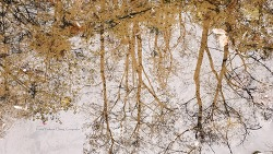 물웅덩이에 비친 숲과 올챙이들