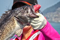 신기한 어류 생태, 낚시로 잡힌 물고기가 '메롱'하는 이유