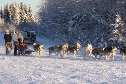 11월 [알래스카 페어뱅크스 개썰매 체험] Dog Sledding in Fairbanks, Alaska  [알래스카 여행]