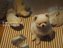 LG유플러스 '반려동물 IoT' 디지털 캠페인