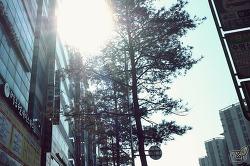 발산/마곡 중화요리 열빈