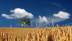 가을을 대표하는 추수 이미지 자료 모음