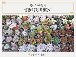 봄이 느껴지는 인천대공원 화훼단지