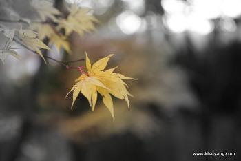 SKT 관악산 행복동행길에서 만난 소소한 행복