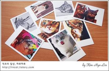 [적묘의 사진tip]선물하기 좋은 폴라로이드,고양이 사진인화, 스냅스 사이트 이용