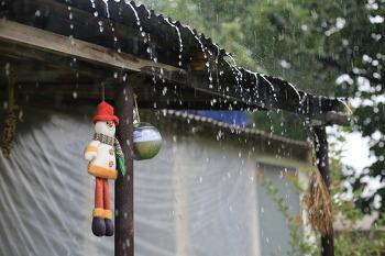 [전원생활] 비 억수로 내리는 시골집, 태풍 쁘라삐룬 # 비오는 날의 낭만 # 열무 수확하기 2018