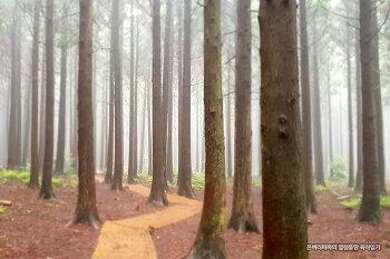 산책하며 힐링하기 좋은 곳~ 제주 사려니숲길 붉은오름~!