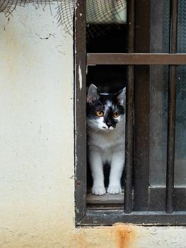거리의 고양이 6/Cats in the street 6