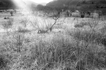 포항 with Leica M4, 35mm f/2.0 summicron asph