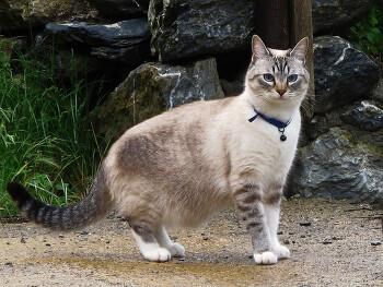 고양이 목에 방울은 누가 다는가?