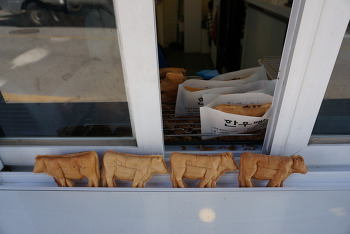 [당일치기 강원도여행]횡성재래시장 횡성한우빵 하누&카누(가격 및 상세정보), 한우빵 추천