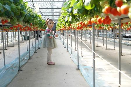 딸기체험농장