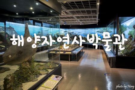 [부산 여행] 아이보다 어른들이 더 좋아하는 부산해양자연사박물관