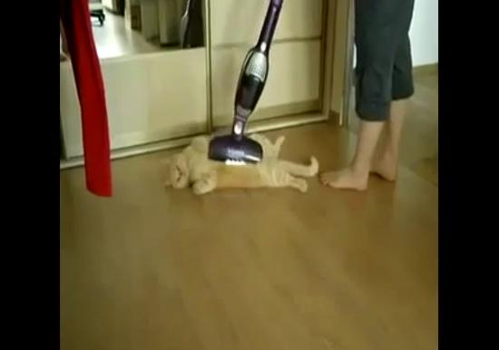 진공청소기 안마 즐기는 고양이