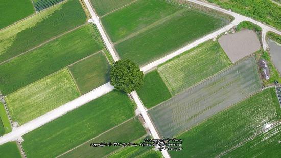 합천 가볼만한곳 야로면 왕따나무