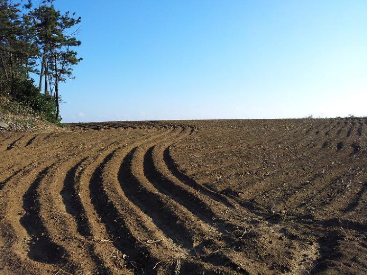 흙, 생명을 키우다