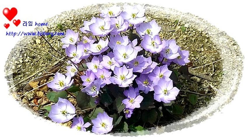이름 모를 꽃? 보라색 꽃 ~